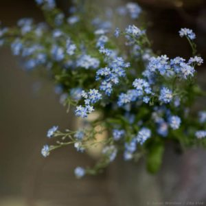 Zita Elze Julian Winslow Forget Me Not s_wm