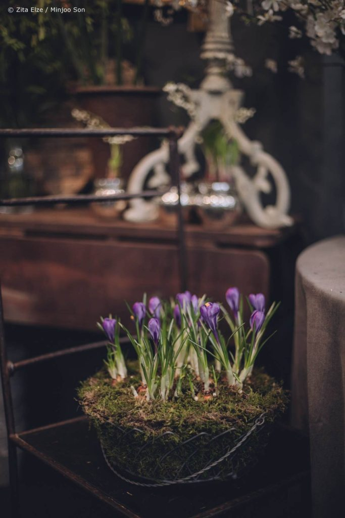 Zita Elze Mothers Day Crocus bulb and moss planter photo: Minjoo Son 1313_wm_L