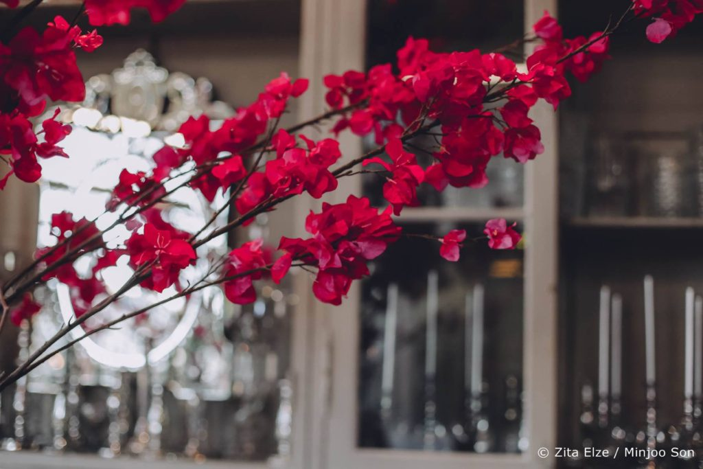 Rouge faux bougainvillea Zita Elze flowers, photo Minjoo Son